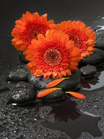 Red Blossoms on Black Stones