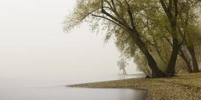 Germany, North Rhine-Westphalia, Cologne, Pastures on the Rhine Shore Beside the Zoo Bridge in Fog