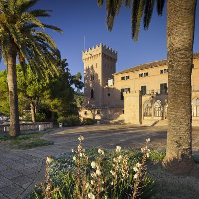 Spain, Majorca, Andratx, Castell De Son Mas, Palm