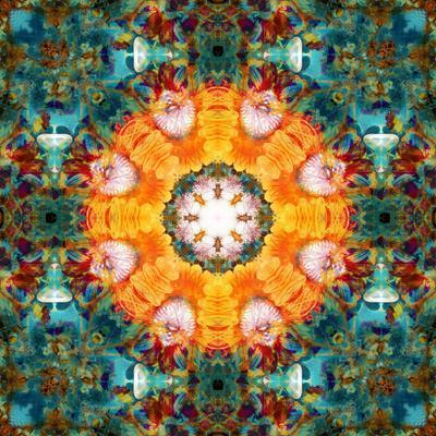 A Mandala from Flower Photographs
