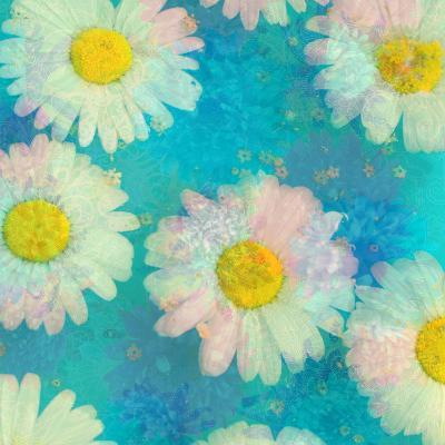 Composing of White Daisies on Blue Background