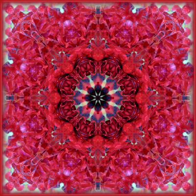 Colorful Photographic Layer Work from Red Roses