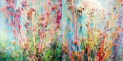 Wild Grasses Layered with Flower Colors