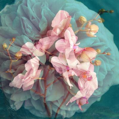 A Delicate Floral Montage from Blooming Orchids and Rose