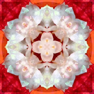 Symmetrical Photomontage of a White Orchid on Red Floral Ornament with Circle