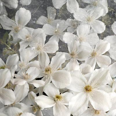 A Floral Montage from Clematis and Texture