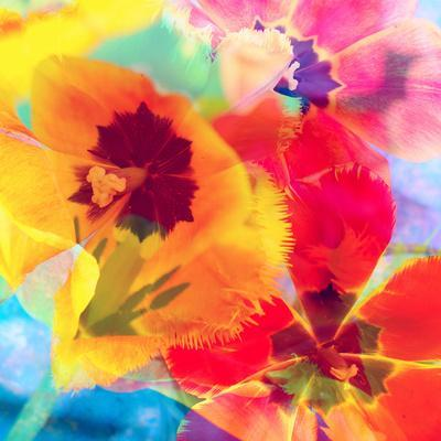 Dreamy Photographic Layer Work from Tulips