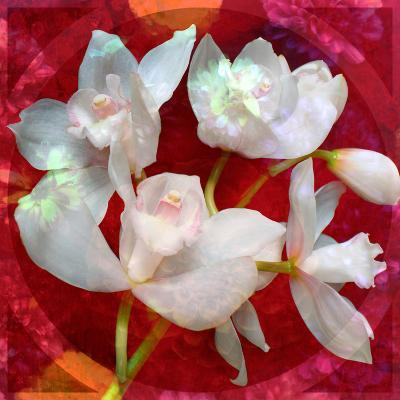 Photomontage of a White Orchidaceae on Red Floralen Ornament with Circle