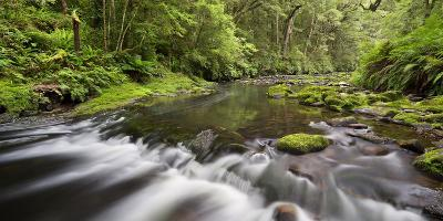Catlins River, Southland, South Island, New Zealand