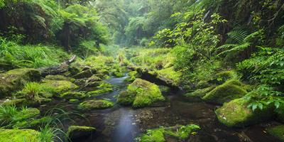 Rain Forest, Omanawa Gorge, Bay of Plenty, North Island, New Zealand