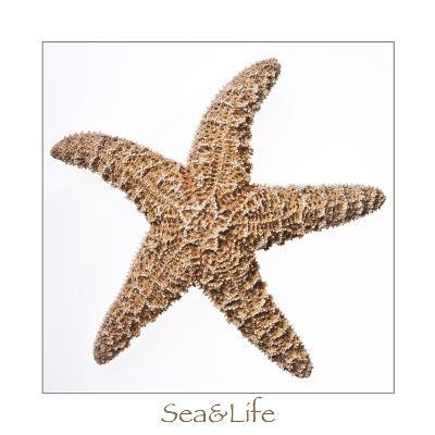 Maritime Still Life with Starfish