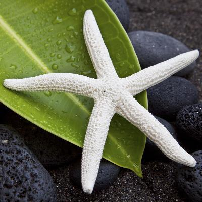 White Starfish on Green Leaf