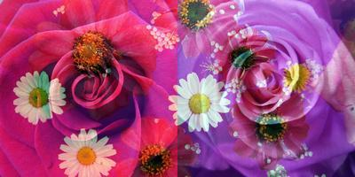 Floral Montages of Rose Blossoms