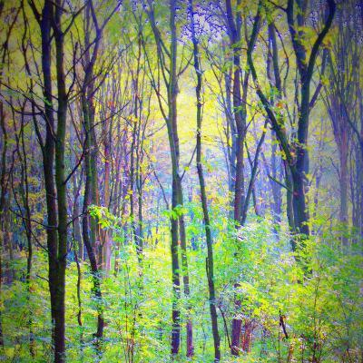 An Abstract Multicolorl Montage from the Forest, Photographic Layer Work