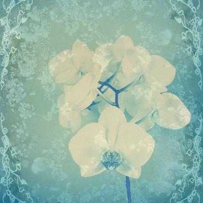 Composing, White Orchid Framed by Floral Pattern