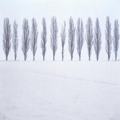 Landscape, Row of Trees, Winter
