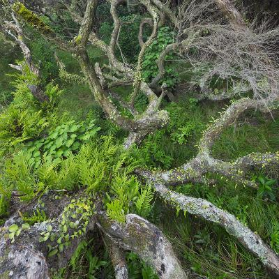 Old Tree in Wharariki, Tasman, South Island, New Zealand