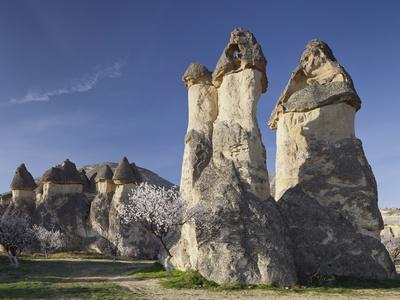 Blossoming Tree and Fairy Chimneys Near Pasabagi, Tuff Stone, Gšreme, Cappadocia, Anatolia, Turkey
