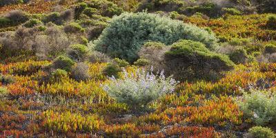 Vegetation, Big Sur, Cabrillo Highway 1, California, Usa