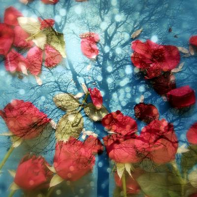 A Montage of a Tree and Red Rose Petals in Sparkling Light and Reflections