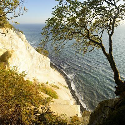 Denmark, Island M¿n, the Chalk Rocks of M¿ns Klint, Tree in the Abbruchkante
