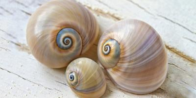 Colorful Sea Snails on Wood