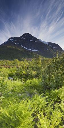 Norway, Northern Country, Hinnoya, Botntindan, Fern