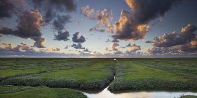 Salt Meadow, Evening Mood, Westerhever (Municipality), Schleswig-Holstein, Germany