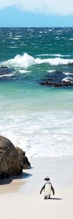 Awesome South Africa Collection Panoramic - Penguins on the Beach V