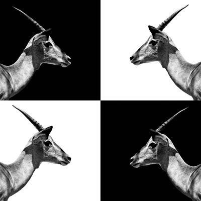 Safari Profile Collection - Antelopes Impalas II