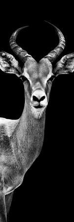 Safari Profile Collection - Antelope Black Edition III