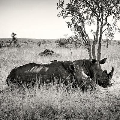 Awesome South Africa Collection Square - Two Rhinoceros sleeping