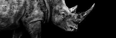 Safari Profile Collection - Rhino Black Edition III