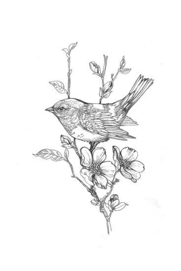 Line Drawing Of Bird On Flowering Branch