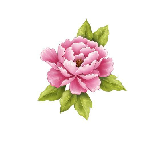 Single Pink Peony Flower Posters At Allposters