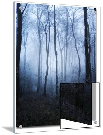 Forest and Brush in Dense Fog