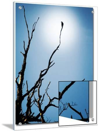 Bird Perched on Branches Reaching to the Sky