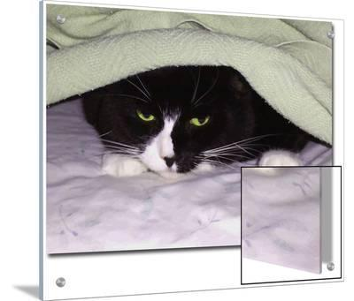 Cat Looking Out from under Blanket