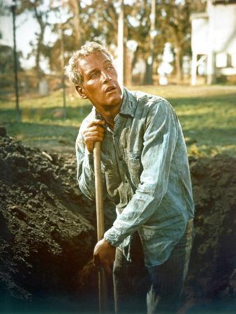 Cool Hand Luke, Paul Newman, 1967