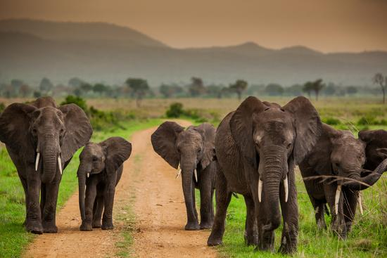 African Elephant Family On Safari Mizumi Safari Park