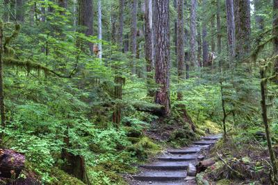 Trail to Sol Duc Falls, Rain Forest, Olympic National Park, UNESCO World Heritage Site, Washington