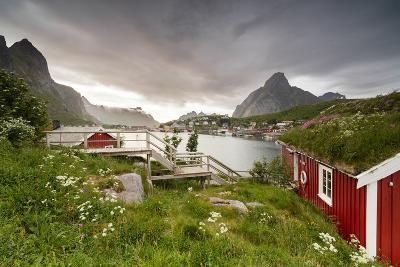 Green Grass and Flowers Frame the Typical Rorbu Surrounded by Sea, Reine, Nordland County