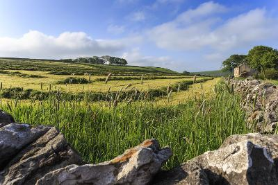 Newly Mown Grass in Field with Dry Stone Walls, Copse of Trees and House, Spring Morning Sun