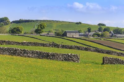 Typical Spring Landscape of Village, Cattle, Fields, Dry Stone Walls and Hills, May