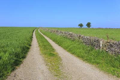 Track Disappears into Distance, Grass, Two Trees and Dry Stone Walls