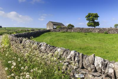 Typical Spring Landscape of Country Lane, Dry Stone Walls, Tree and Barn, May, Litton
