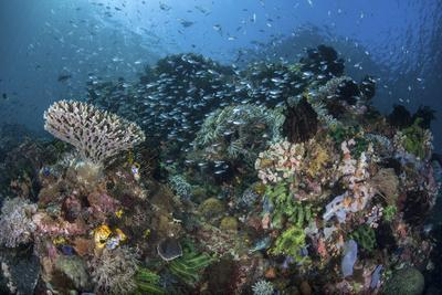 A Colorful Coral Reef Is Covered by Fish in Indonesia