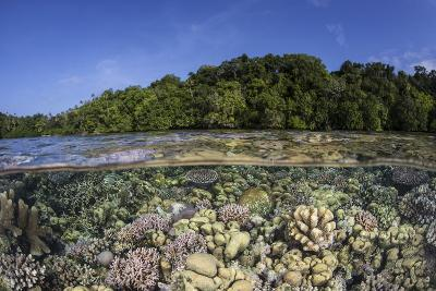 A Diverse Coral Reef Grows in Shallow Water in the Solomon Islands