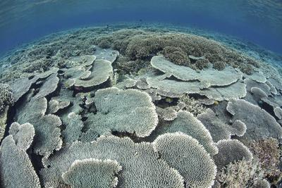 Fragile Corals Grow in Shallow Water in Komodo National Park