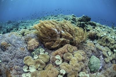 Corals Compete for Space to Grow on a Reef in Indonesia